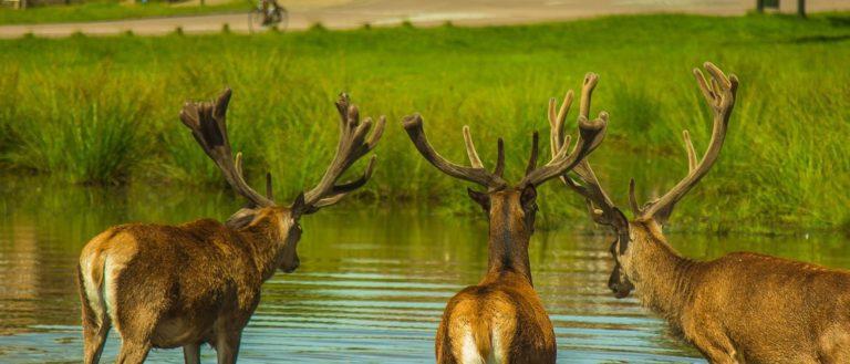 Deer near road.