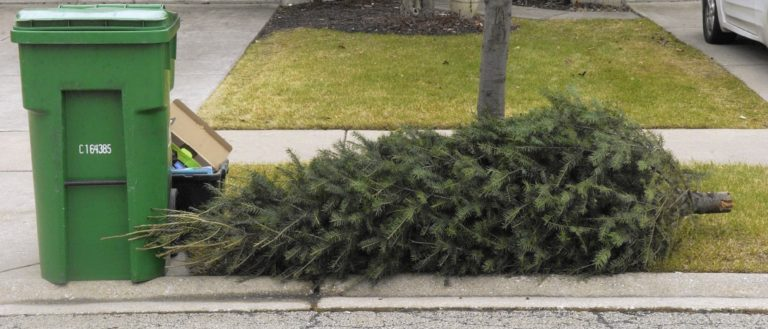 A Christmas tree on the curb awaiting pickup.