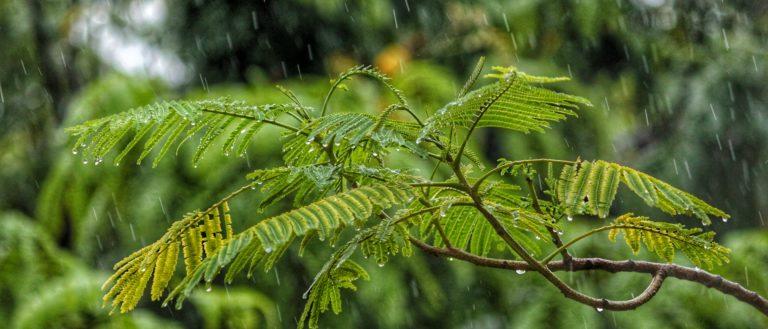 Raindrops falling on foliage.
