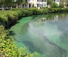 Cyanobacteria blooms will typically occur on the surface of a water body and vary in color, often looking bright green to blue-green.
